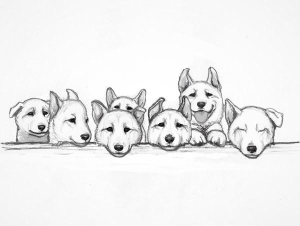 Puppytesten